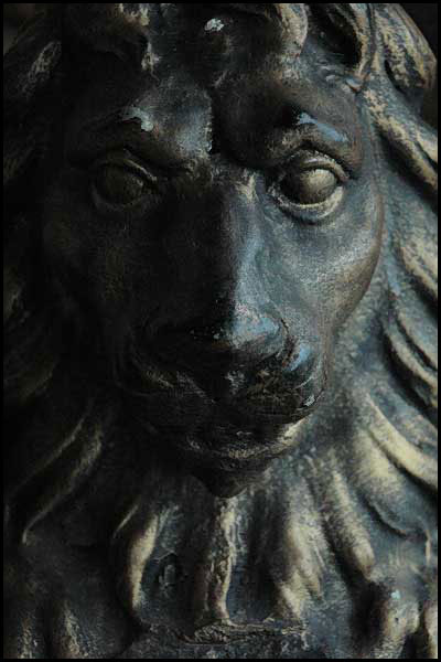 Lion_by_matic